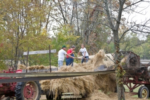 Just like they did 75 years ago, folks load hay into the thresher machine.